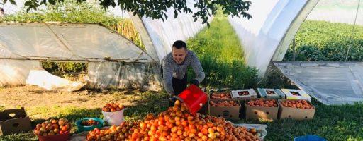 Екопродукт від семінаристів: закарпатцям пропонують придбати томати та підтримати академію
